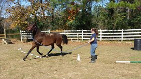Horse Training/Gentling in Fort Campbell, Kentucky
