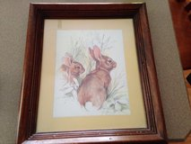 Rabbit Picture in Joliet, Illinois