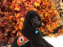 Service Dog Placements in Naperville, Illinois