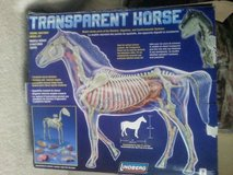 TRANSPARENT HORSE MODEL in Chicago, Illinois