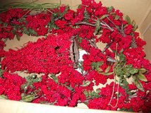 RED BERRY FOR WREATH in Cherry Point, North Carolina