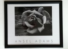 Ansel Adams Rose & Driftwood in Chicago, Illinois
