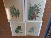 Botanical Prints in Cherry Point, North Carolina