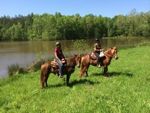 Ranch hand in trade for pasture board in Camp Lejeune, North Carolina