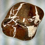 RARE STONE 50 Million Years Old SEPTARIAN RAW in Fort Bragg, North Carolina