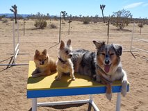 Dog Training: Obedience, Agility and more... in Yucca Valley, California