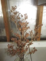 Dried plants for floral arrangements in St. Charles, Illinois