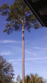 tree work....free estimates in Beaufort, South Carolina
