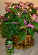 Artifical Poinsetta Arrangement in Wicker Basket in Ramstein, Germany