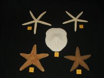 Star Fish & Sand Dollar Collection in Bolingbrook, Illinois