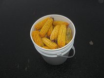FEED CORN ON THE COB in Naperville, Illinois