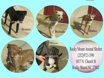 Keller's compassion animal rescue needs -fosters  ASAP in Camp Lejeune, North Carolina