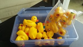 a lot of rubber duckies in Camp Lejeune, North Carolina