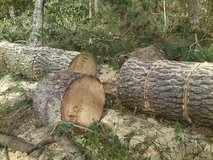 Cut Pine Tree Sections - Great for target practice, tomahawk throwing, tree stump Patio Design in Camp Lejeune, North Carolina