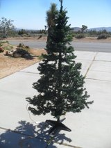 ^^^  Christmas Tree  ^^^ in Yucca Valley, California