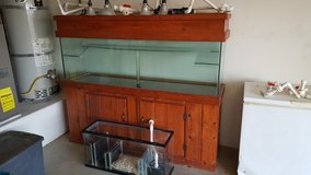 Custom Aquatic turtle aquarium in 29 Palms, California