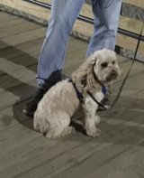 our Dog is missing! Please help! in Camp Lejeune, North Carolina