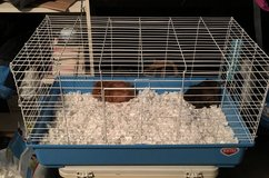 Guinea pigs - 2 with cage and supplies in Naperville, Illinois