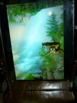 Wolf Picture/Mirror in Fort Campbell, Kentucky