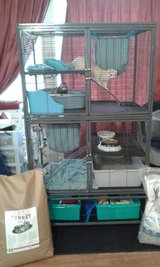 Ferrets (Gadget and Gizmo) in Fort Lewis, Washington