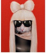 Pets Rock Canvas Art Lady GaGa in Fort Irwin, California