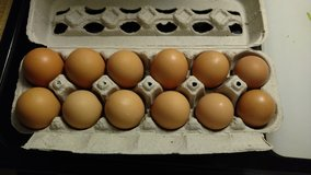 Farm Fresh Eggs in Houston, Texas