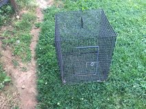 Rabbit / critter cage in Fort Campbell, Kentucky
