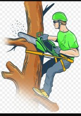 Tree cut down or trim and hauled in Morris, Illinois