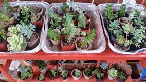 Beautiful Succulents at low prices in Camp Pendleton, California