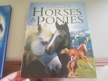 All about Horses and Ponies for kids in Fort Riley, Kansas