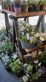 Healthy Succulents at lower prices in Camp Pendleton, California