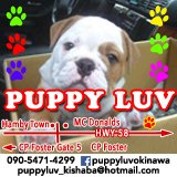 Puppy Shop Staff Wanted in Okinawa, Japan