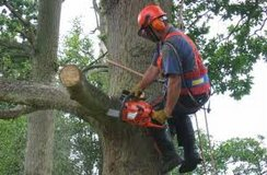 Tree Climber and Groundsman in Beaufort, South Carolina