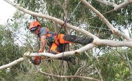 Arborist/Tree Climber in Beaufort, South Carolina