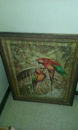 Large Parrot Pictures (2) in Cochran, Georgia