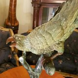 GREAT BRONZE PARROT in Ansbach, Germany
