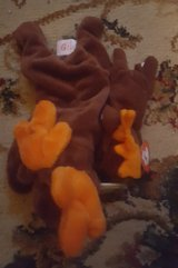Beanie Baby Ty Chocolate Moose Large and Small in Camp Lejeune, North Carolina