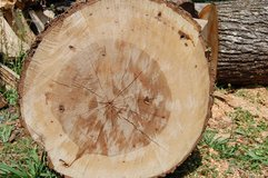 FREE FIREWOOD (OAK AND HICKORY) (BEAUFORT) in Beaufort, South Carolina