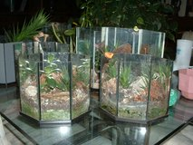 terrariums in Orland Park, Illinois