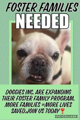 Doggie Orphans Great and Small - Looking for Foster Families to Save Lives in Okinawa, Japan