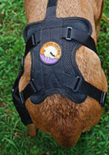 Dog knee brace for torn ACL in Tacoma, Washington