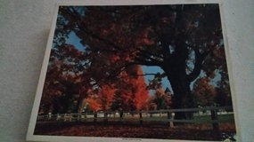 Golden Leaves of Autumn - Puzzle - 1500 pc. in St. Charles, Illinois