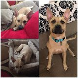 Small rescue looking for Foster's and forever homes for animals in Wilmington, North Carolina