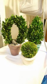Small topiary trees Set $20 in Travis AFB, California