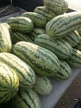 fresh local grown big sweet old timey jublee watermelons in Fort Bragg, North Carolina