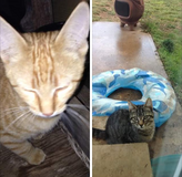 Free kittens to a good home. in Fort Lewis, Washington
