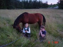 Horse Boarding - Pasture Self Care or FULL CARE AVAILABLE Horse Boarding in Fort Lewis, Washington