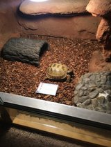 Turtle and tank in Fort Lewis, Washington