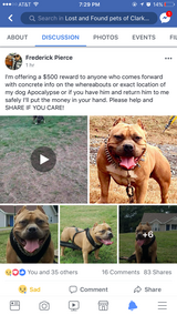 Missing/stolen pit in Fort Campbell, Kentucky