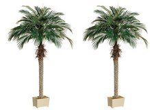 WANTED: SILK PALM TREES in Naperville, Illinois